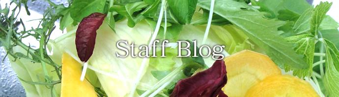 エレガンスのスタッフブログ